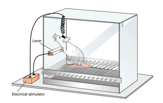 Experiment Ratte Lustzentrum